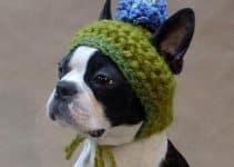 Ideas de ropa tejida para perros modelos patrones gratis