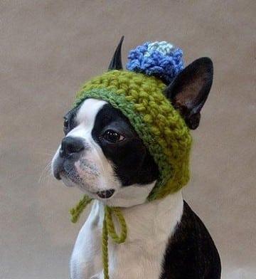 ropa tejida para perros dos agujas