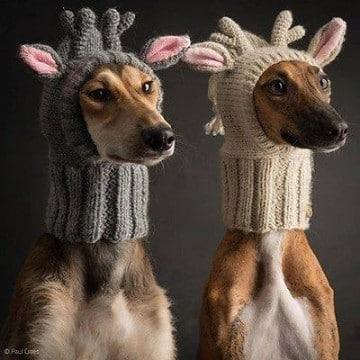ropa tejida para perros pequeños