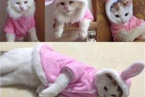 Descubre como hacer ropa para gatos en sencillos pasos