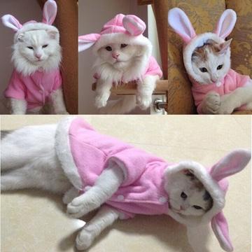 como hacer ropa para gatos disfraz