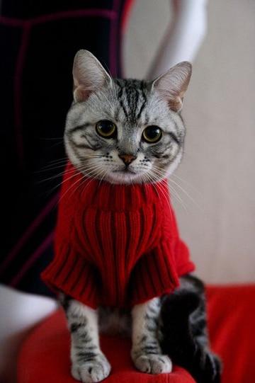 como hacer ropa para gatos tejido