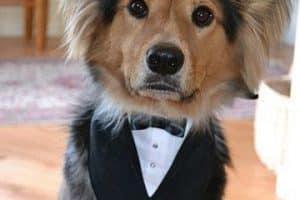 Fotos con ideas de como hacer ropa para perros pequeños