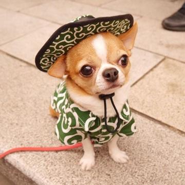 como hacer ropa para perros pequeños y graciosos