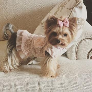 como hacer vestidos para perros elegantes