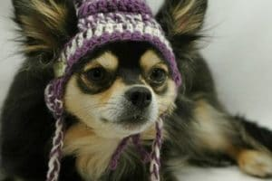 Aprende como hacer una gorra para perro en crochet y tela