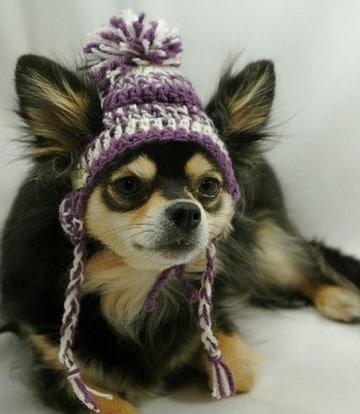 como hacer una gorra para perro a crochet