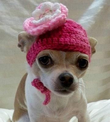 como hacer una gorra para perro diseños