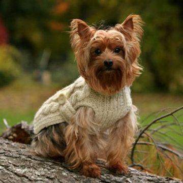chalecos tejidos para perros a dos agujas