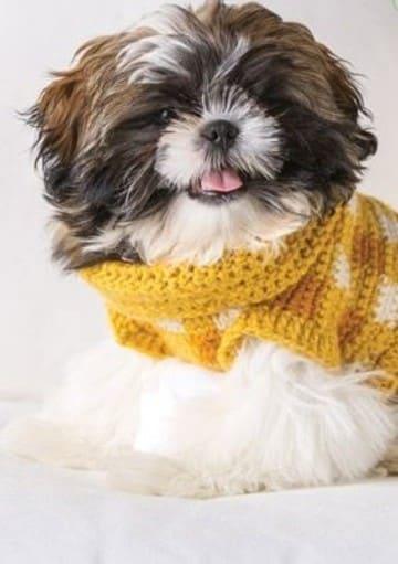 chalecos tejidos para perros en crochet
