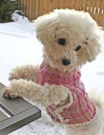 chalecos tejidos para perros pequeños
