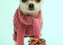 Los jerseys para perros pequeños con lo que es tendencia