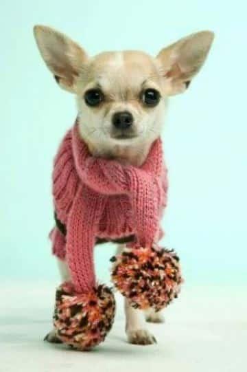 jerseys para perros pequeños con bufanda