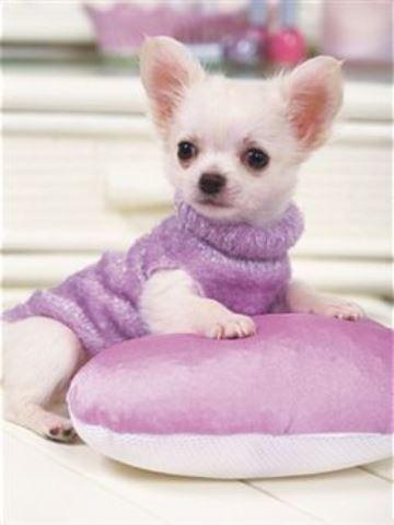 jerseys para perros pequeños hembra