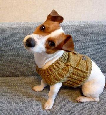 jerseys para perros pequeños tejido a dos agujas