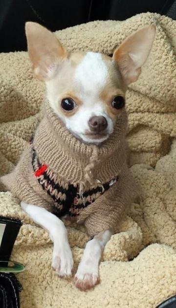 jerseys para perros pequeños tejido