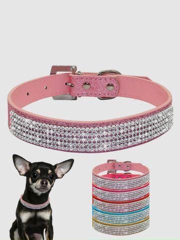 accesorios para perros chihuahua hembras