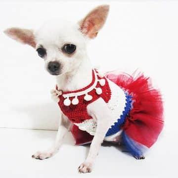 imagenes de ropa para perros chihuahua