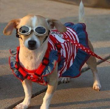 imagenes de ropa para perros con accesorio