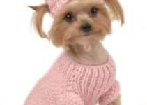 Admira a estos modelos en estas imagenes de ropa para perros