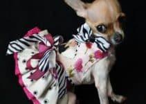 Preciosos y glamurosos vestidos para perritas chihuahua
