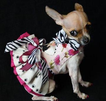 vestidos para perritas chihuahua de dia