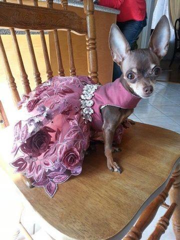 vestidos para perritas chihuahua de fiesta