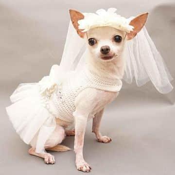 vestidos para perritas chihuahua de novia