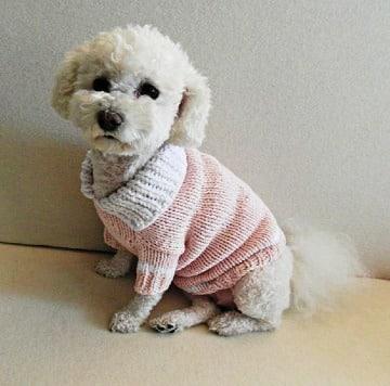 como hacer un abrigo para perro facil