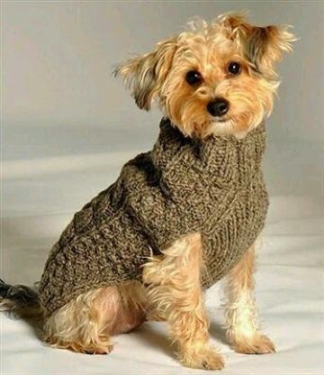 como hacer un abrigo para perro paso a paso