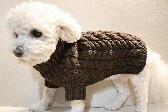 como hacer un abrigo para perro pequeño