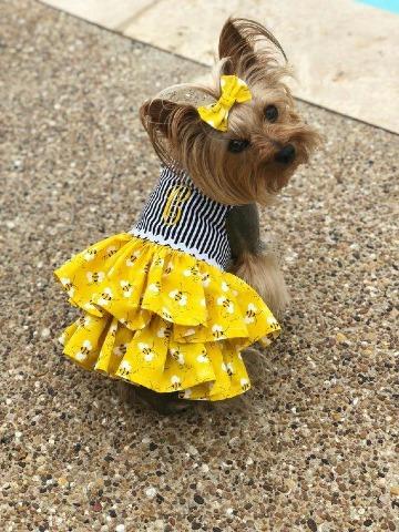 modelos de vestidos para perritas pincher
