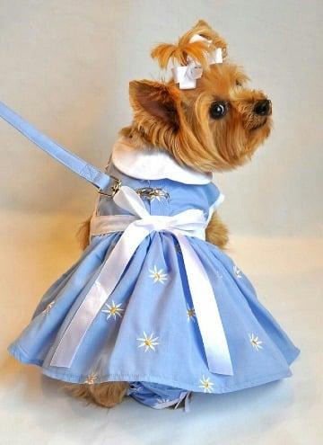 vestidos para perritas pincher miniatura
