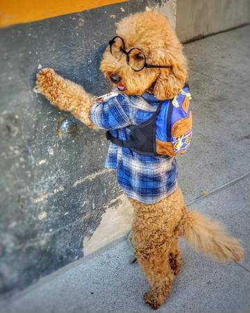 bolso y ropa para perros machos