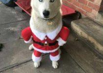 4 ideas de ropa navideña para perros de diversos tamaños