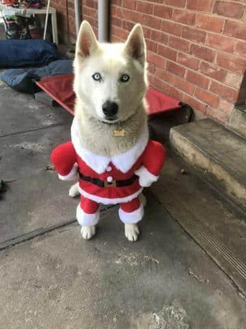 disfraces ropa navideña para perros