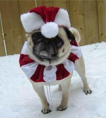 ropa navideña para perros con gorro