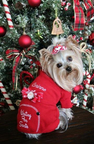 ropa navideña para perros pequeños