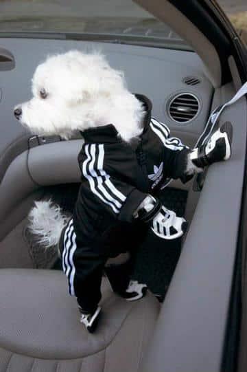ropa para perros machos estilo deportivo
