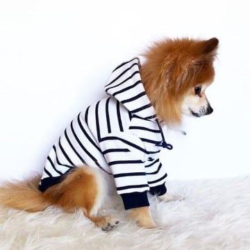 ropa para perros machos fashion