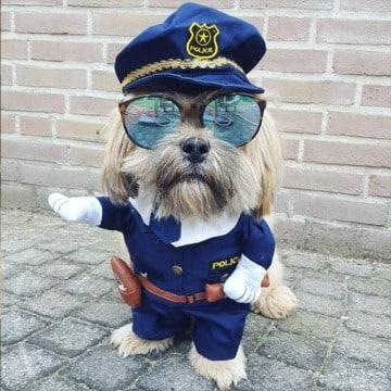 ropa para perros machos policia