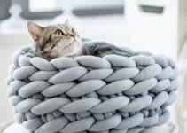 3 diseños geniales de camas tejidas para gatos