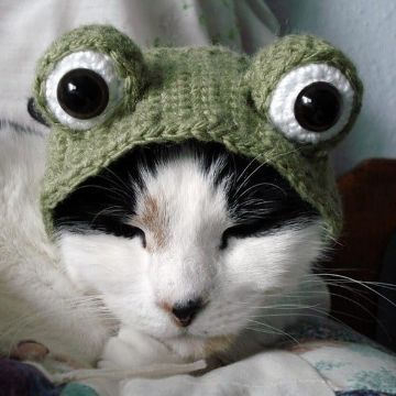 gorros para gatos a crochet de otros animales