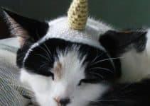4 divertidos diseños de gorros para gatos a crochet
