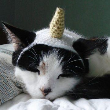 gorros para gatos a crochet unicornio
