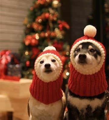 gorros tejidos para perritos para navidad