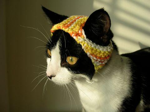 gorros de gato tejidos para gatos